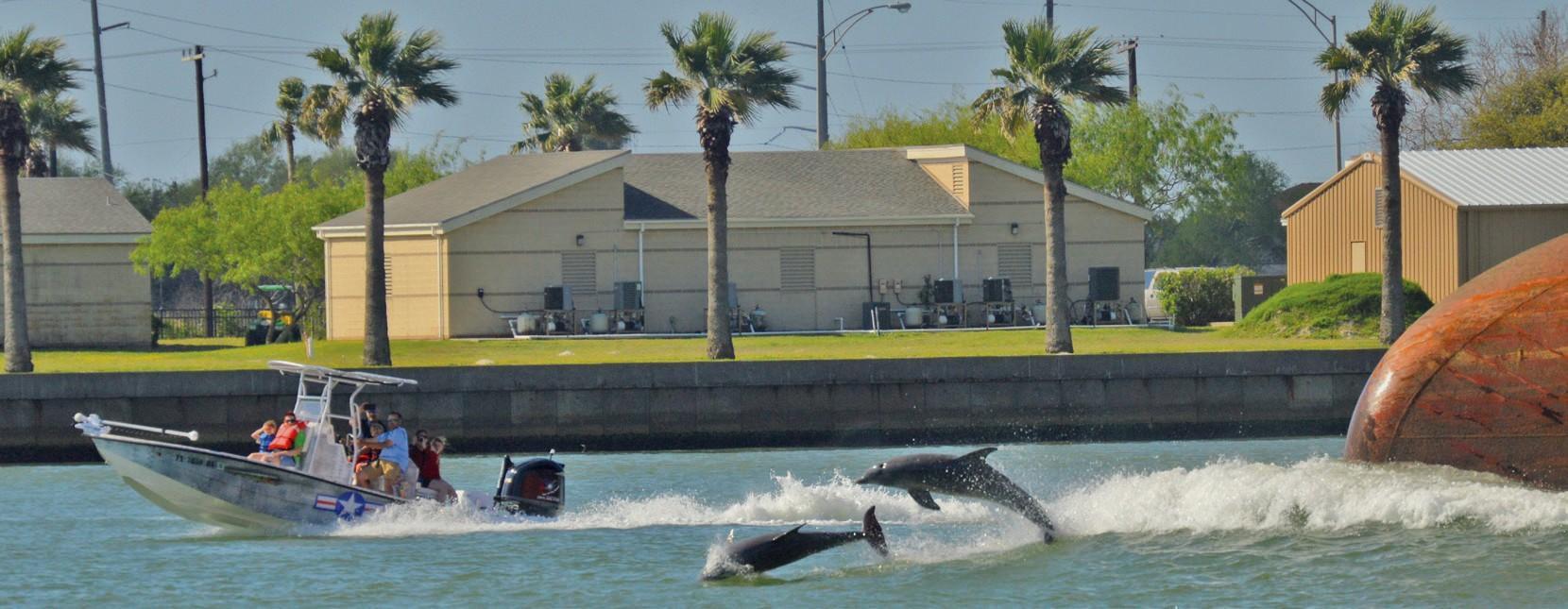Dolphin Delight Port Aransas South Jetty